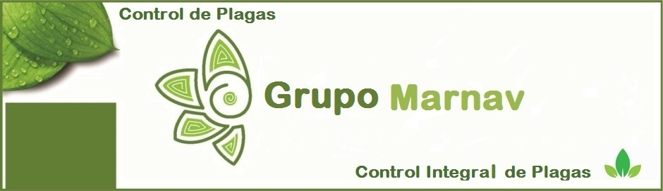 GRUPO MARNAV SERVICIO DE CONTROL DE PLAGAS URBANAS