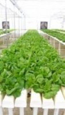 Cultivos Hidropónicos Monte Cristo